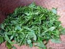 Это лист, только что собранный. Это последние дни сбора, поэтому форма листа не идеальны. Тот чай, что собирали до наступления праздника Цинь Мин - отборный, маленький, однородный.