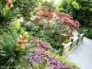 Императорский сад, знаменитые восемнадцать кустов. Обнесены оградой, с них по-прежнему собирают лист.