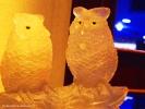 Белые совы :-)