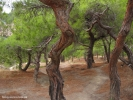 Дремучий лес. Здесь старые деревья. Красивые и говорящие. Некоторым из них около трехсот лет!