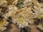 Цзюй Хуа – Хризантема чайная (фото 1)