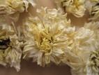 Цзюй Хуа – Хризантема чайная (фото 4)