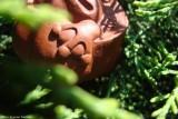 Жаба в листе лотоса (фото 4)