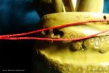 Светлые инструменты из корня бамбука (фото 5)