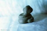 Чешуйчатая змея (фото 3)
