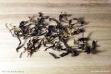 Гу Шу Дянь Хун - Красный чай из Юннани со старых деревьев (фото 2)