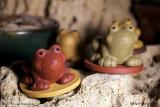 Лягушка на монетке (фото 2)