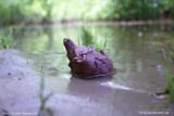 Черепаха с летучей мышью и лягушкой (фото 1)