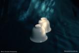 Белоснежная тонкая чашка (фото 6)