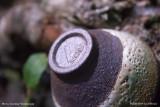 Керамическая открытая чашка (фото 6)