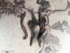 Ми Лань Сян Дань Цун - Аромат медовой орхидеи (фото 7)