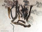 Ми Лань Сян Дань Цун - Аромат медовой орхидеи (фото 8)