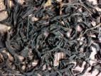 Дань Цун Хун Ча (Да Е) - Одинокие кусты, красный чай (фото 4)