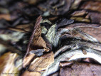 Лао Бай Ча - Выдержанный белый чай, большой блин (фото 4)