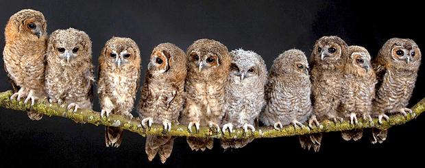 many-owls
