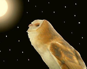 moon-owl-peg-urban