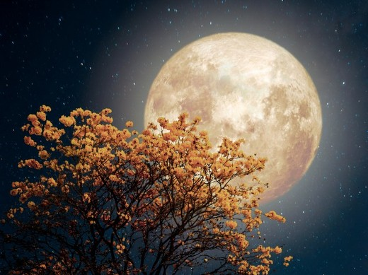 1-beautiful-tree-yellow-flower-blossom-with-milky-way-star-in-night-skies-full-moon-retro-fantasy-style-artwork-with-vintage-color-tone_1484-489